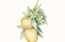 Acuarela Limón