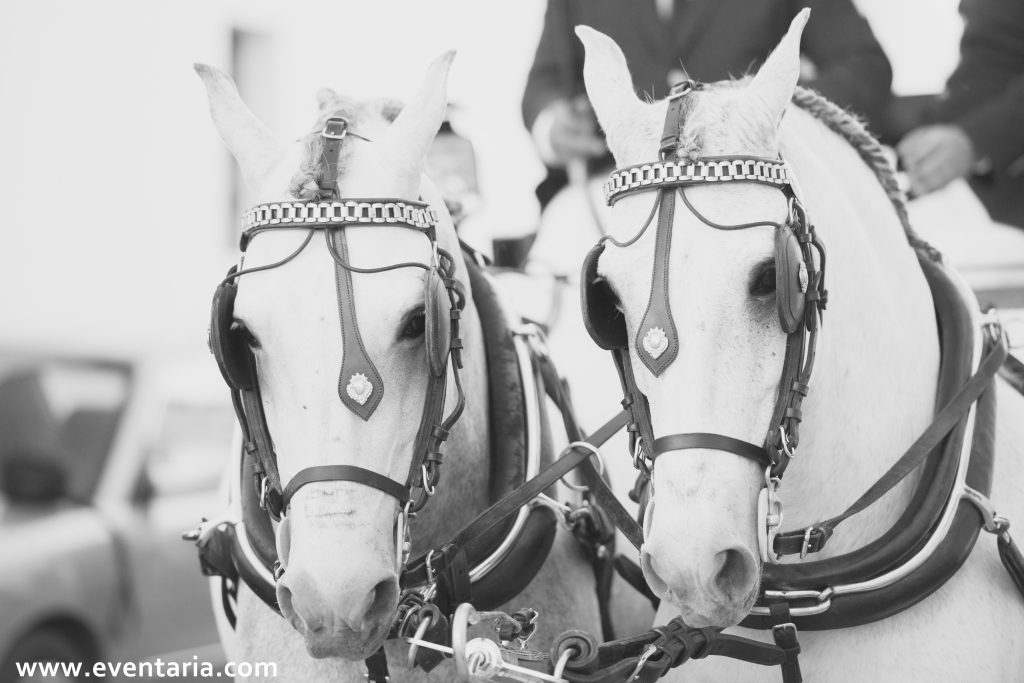 Coche de caballos boda sevilla